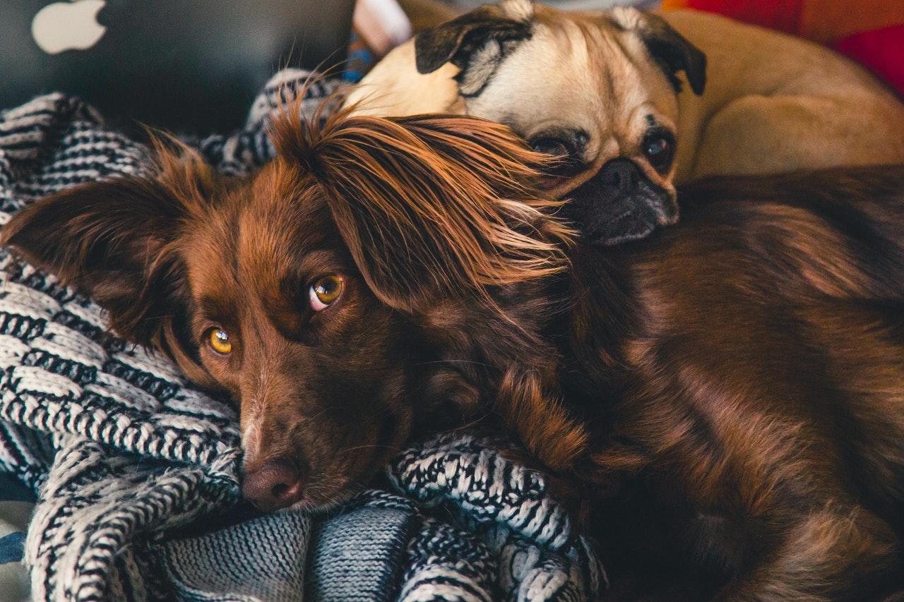 Kiingdog, la bonne adresse pour trouver les meilleurs accessoires pour chien