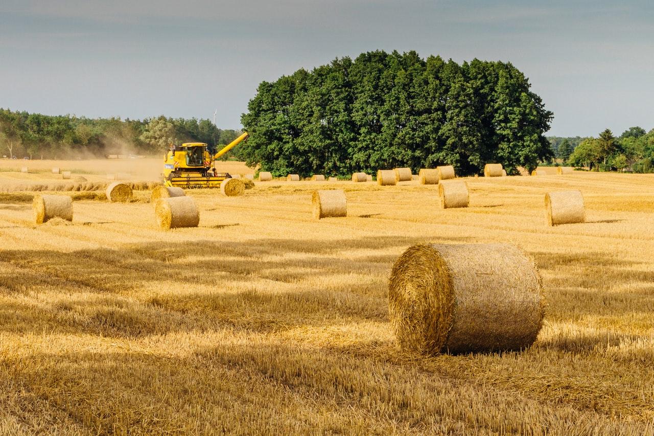 Marché des engrais, les facteurs qui régissent le prix